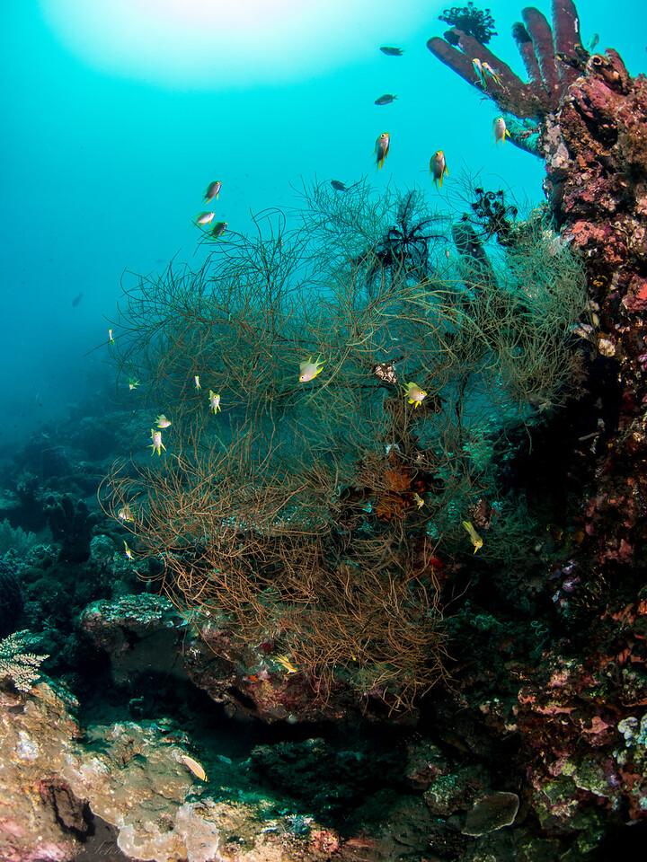 Riffszene, Teluk Karang Bondalem