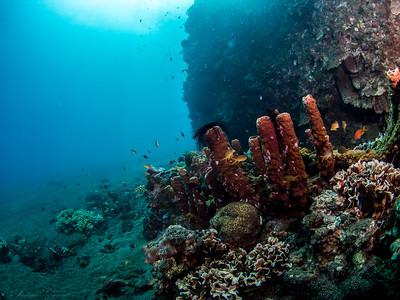 Röhrenschwämme, Teluk Karang Hausriff