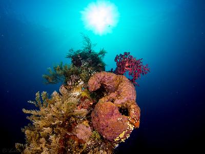 Reef scene, Tulamben Liberty