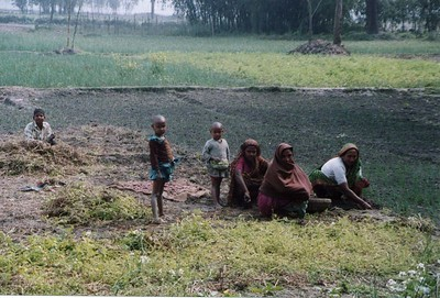 Fieldwork. The average Bangladeshi rice farm is larger than the average Chinese rice farm. However, the average Bangladeshi family is also a lot larger than the average Chinese family.