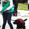 Debbie Blank | The Herald-Tribune<br /> Haley Hall, Batesville, gets exercise walking the route with her black lab, Lola.