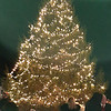 This 25 foot Canaan fir tree was donated by Joe Schneider, Sunman.