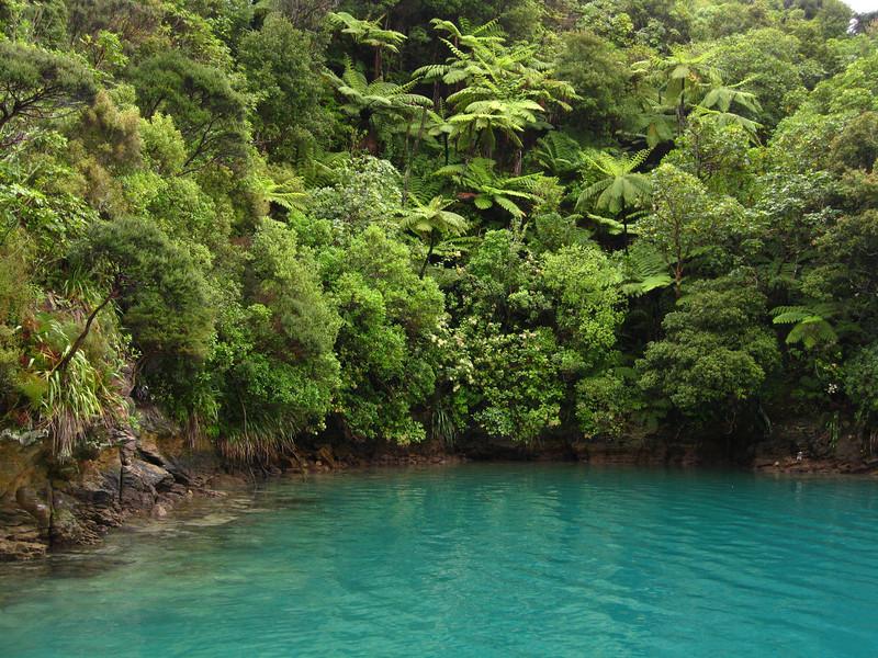 A jungle at the waterline - classic Marlborough.