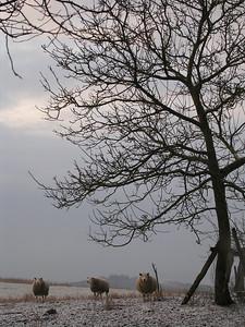 Belgische_ardennen (4 of 54)