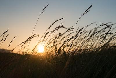 Fawley Grass