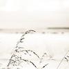 High Key Grass