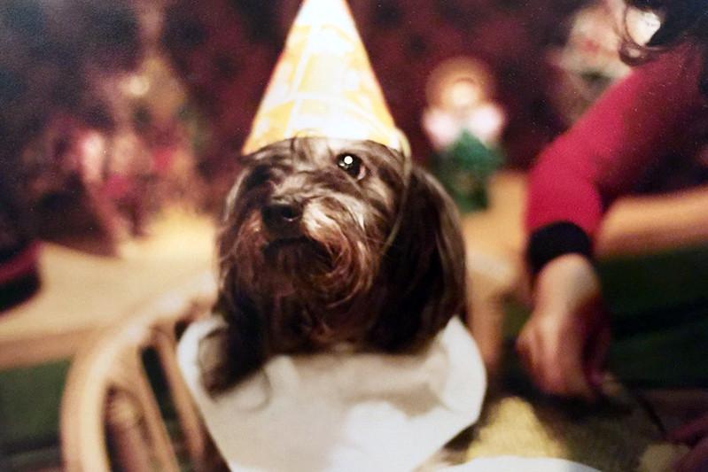 Arya's Birthday 1981 ?
