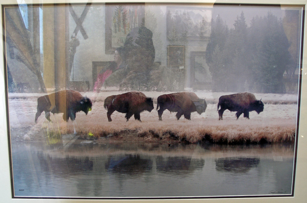 Dec 22.  I like buffalo, even though the reflection of the other side of the room shows in the picture.