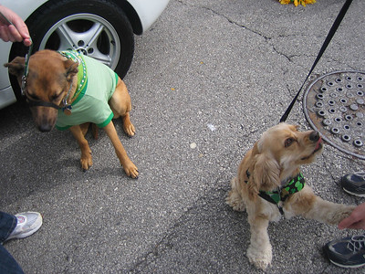 Roxie and Sammy waited patiently for the parade to start.