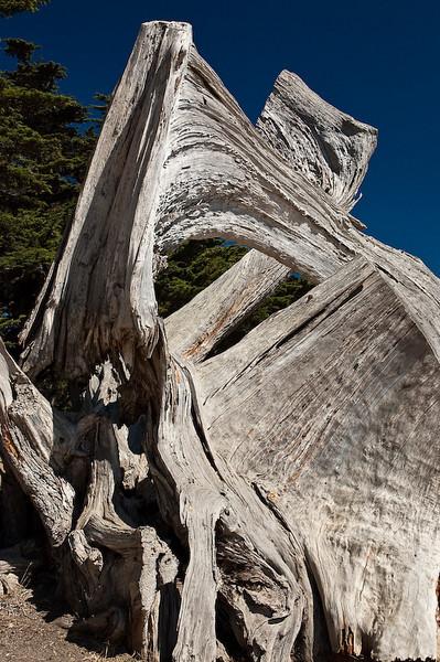 californian driftwood