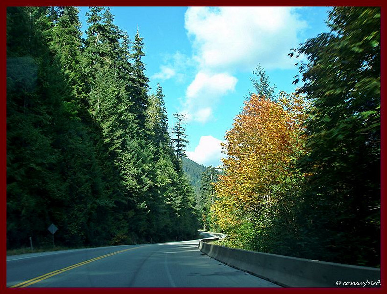 Nearing Cathedral Grove