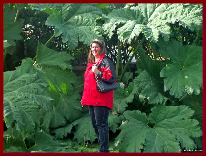 Michelle with Gunnera Manicata