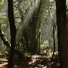 La Gomera | Parque National de Garagonay