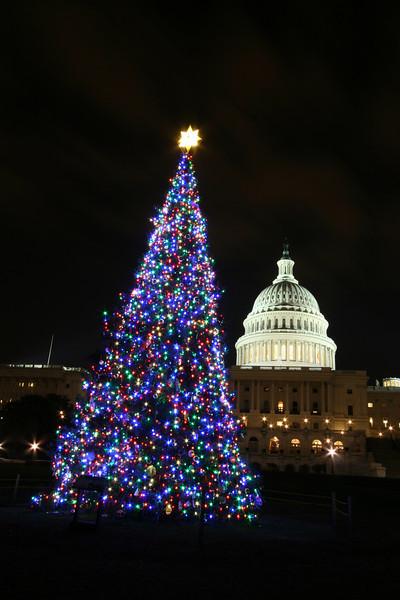 Capitol Christmas Tree 2007