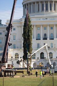 U.S. Capitol Christmas Tree