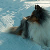 Bowsar relaxes in the snow 01/18/09