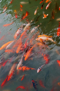 20090829_1056_3080 Fish at DuFu's cottage 杜甫草堂