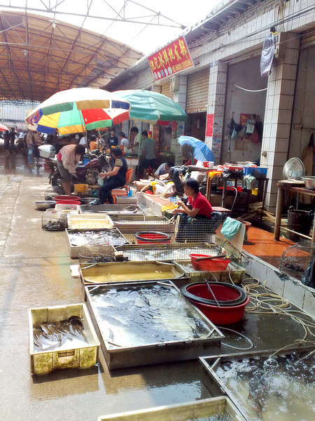 20090831_876 The 'permanent' wet market close to the hotel. I don't suppose they were selling those turtles as pets...though one of those turtle was as big as a dinner plate.