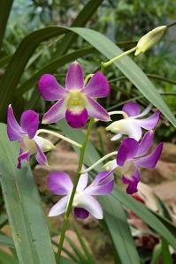20090901_3162 Guangzhou botanical gardens, orchid house