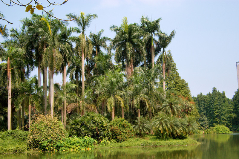 20090901_3129 palm forest at Guangzhou Botanical Gardens