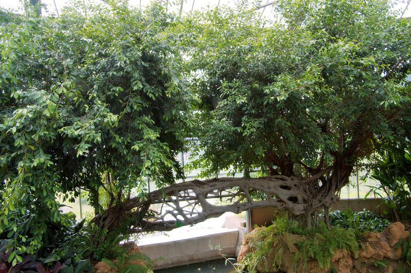 20090901_3197 'couple trees' inside the main enclosure