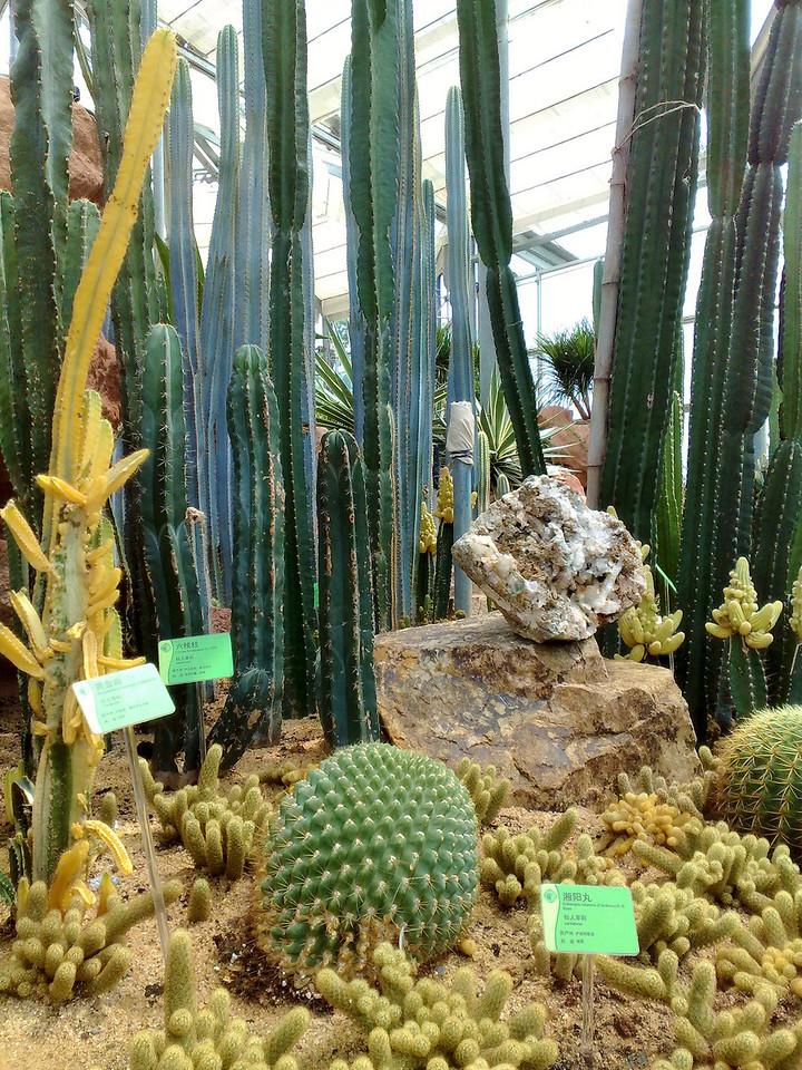 20090901_908 The smallest enclosure is for desert plants