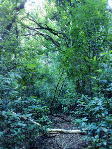 20090901_892 With trees tumbling across the unswept pathways and hordes of hungry mosquitoes, it really was a wilderness walk!