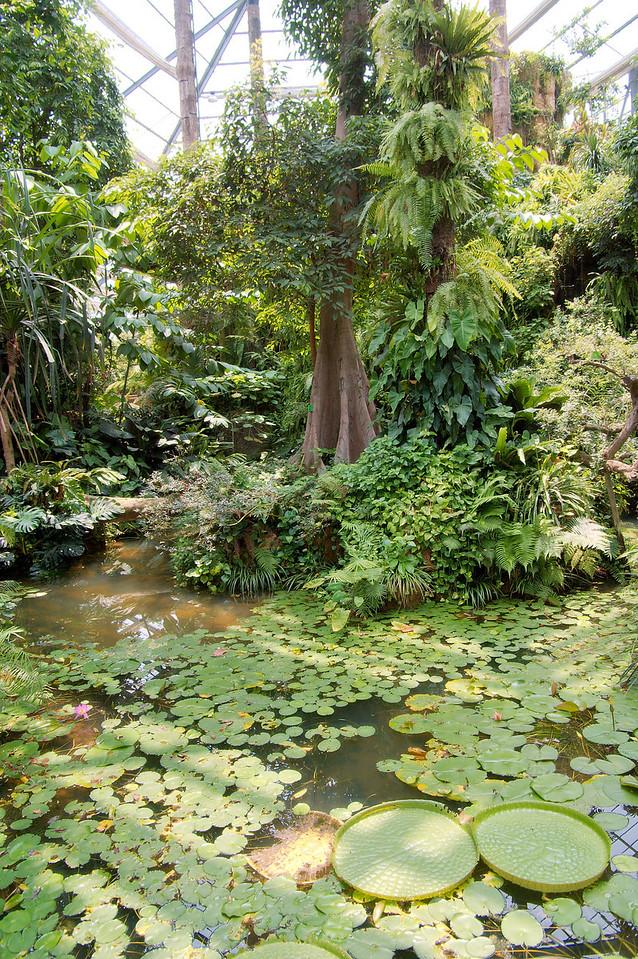 20090901_3180 Inside the main enclosure (tropical rainforest)