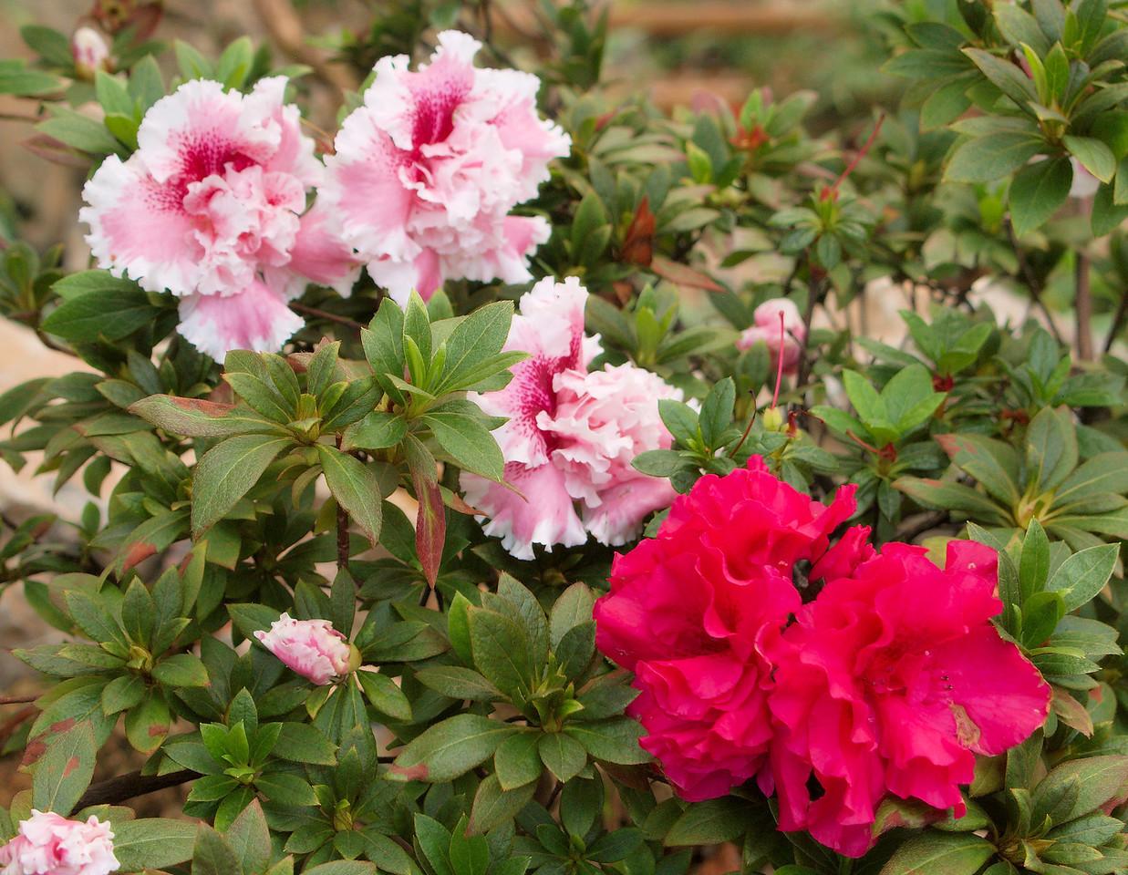 20090901_3187 alpine house flowers