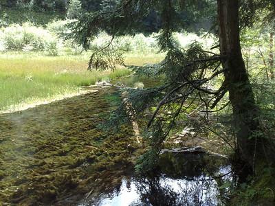 20090823_1201_0734 Reed Lake