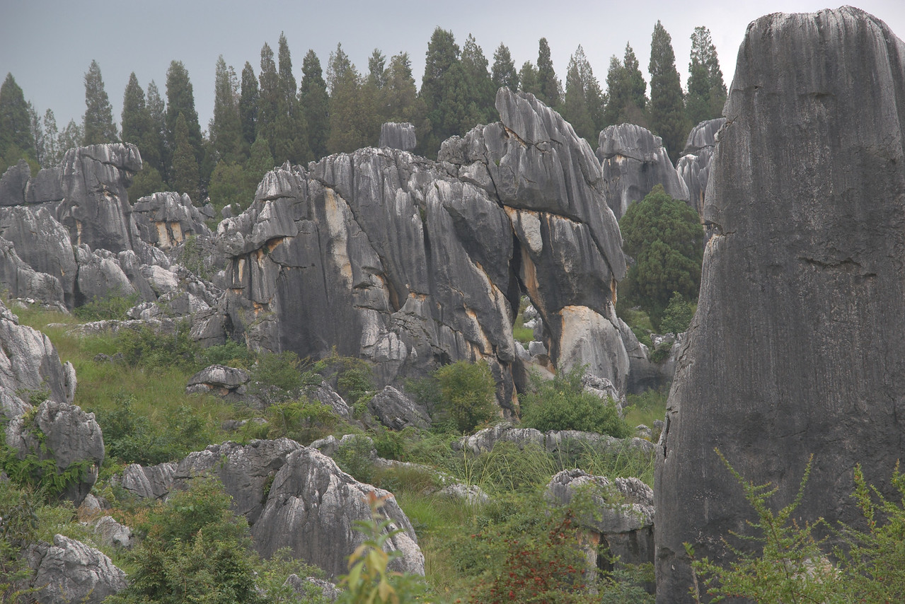 20070727_0466 Stone Forest. The elephant.