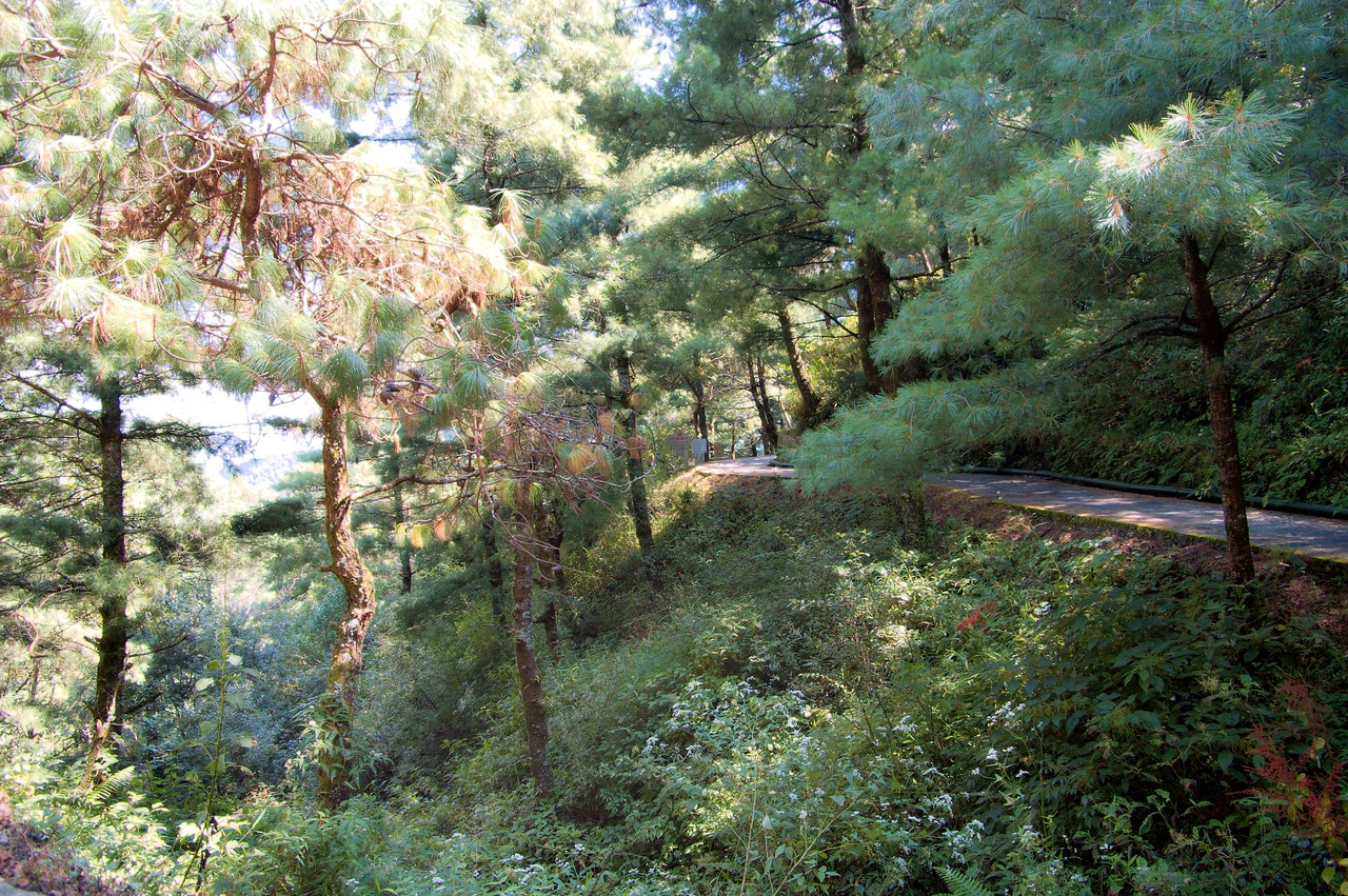 20080924_1709 The Jade Belt Path was constructed in the late 1980s. It is a very flat path, twelve kilometres long and at an altitude of 250-2600 metres.