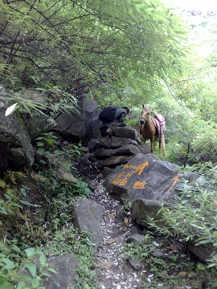 20080930_143 The pony was not too keen to cross this obstruction! The guide had to shift some rocks, and then coax the pony across. On the rock you can the many arrows on the path leading from the Middle Gorge to Woody's Guest House. The arrows are a little bit more difficult to follow in the reverse direction...