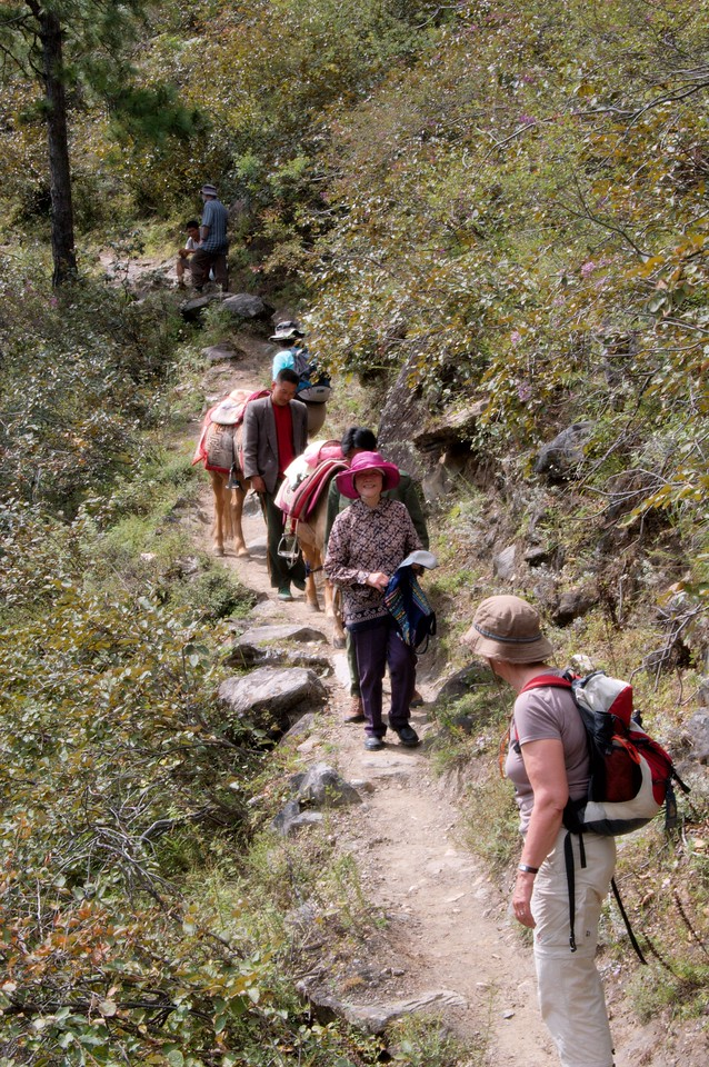 20080929_1920 This group of hikers were heading towards the Halfway Guesthouse. During our walk between Tina's Guesthouse and GuanYin waterfall and back again, we passed two groups of hikers, both consisting of foreigners. One group, from Canada, was completing their walk from Qiaotou to the Middle Gorge. This slightly older group was just starting their walk.