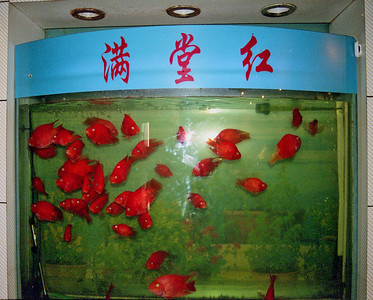 20080921_9ht_10 Fish tank at the hotel