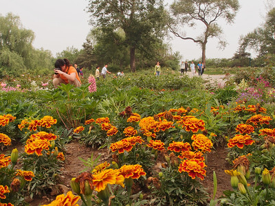 20120513_1333_0342  北京植物园 Beijing Botanical Gardens