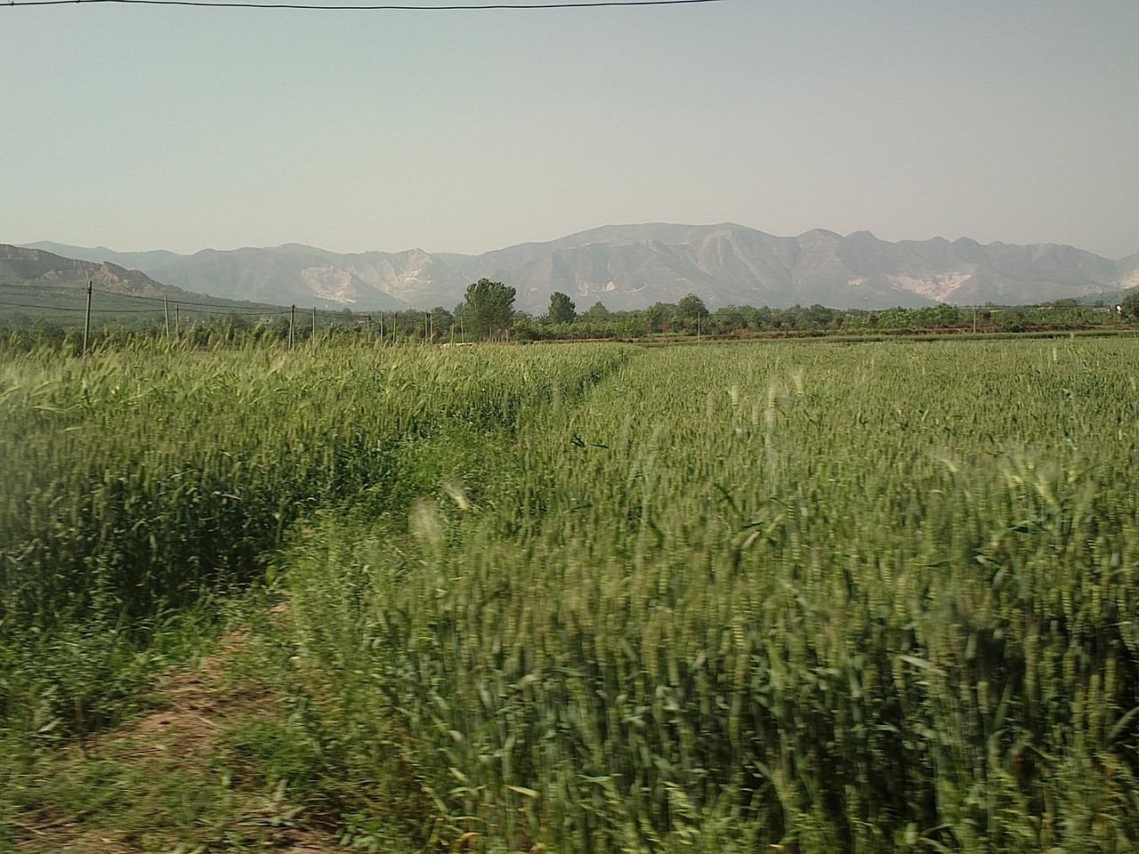 20130510_1535_0146 Fuping 富平 county, Shaanxi 陕西. Wheat fields