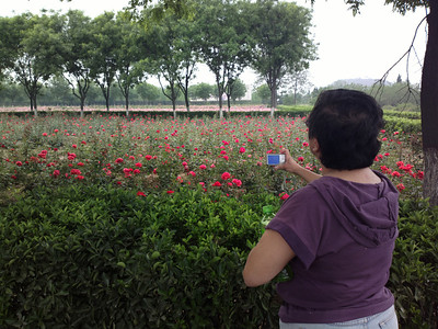 20130504_1346_0097 rose gardens at HanYangLing (next to the museum section)