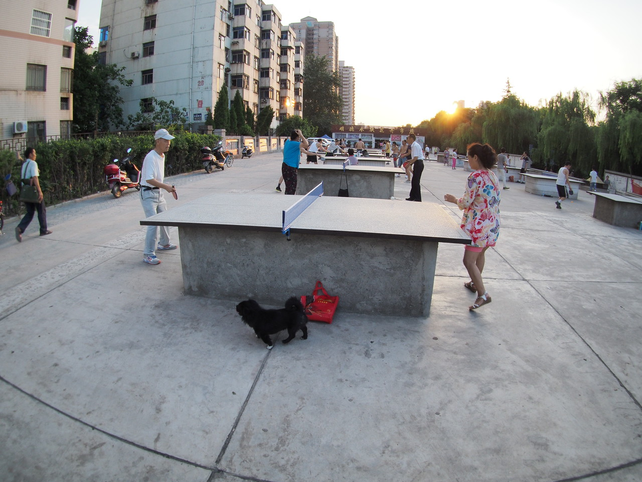 20150815_1900_1379 Table tennis in the evening