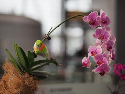 20191010_1109_0700 orchids