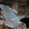 "Stuffed animal nativity scene----Christmas carolers ""Hanta"" the mouse & ""Brule"" the chipmunk<br /> Christmas 2008"