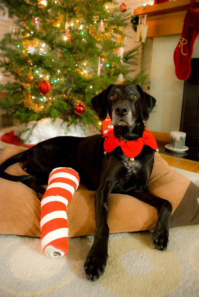 Riley starts off the holidays in a festive cast!