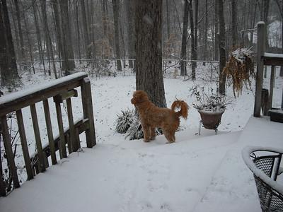Abbey enjoying the snow