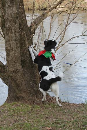 Bessie tries to climb the tree