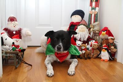 Bessie's Christmas Card - 2011