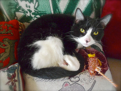 Claire Bear with Brillo the Mouse on her favorite pillow....