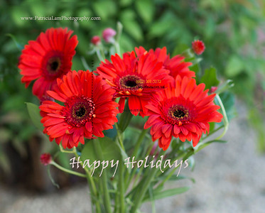 red Gerbera 1013  xmas 1369patlam2HappyHol
