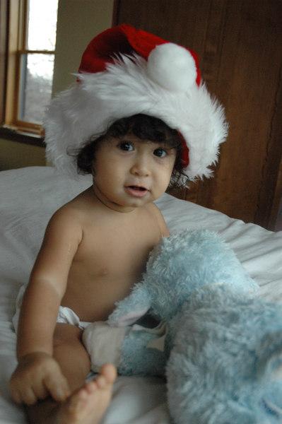 My favorite model posing in his Santa hat