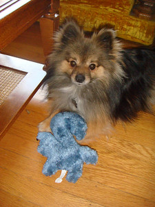 Tetley loves his new blue squirrel.