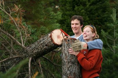 finishing the job cutting the tree free